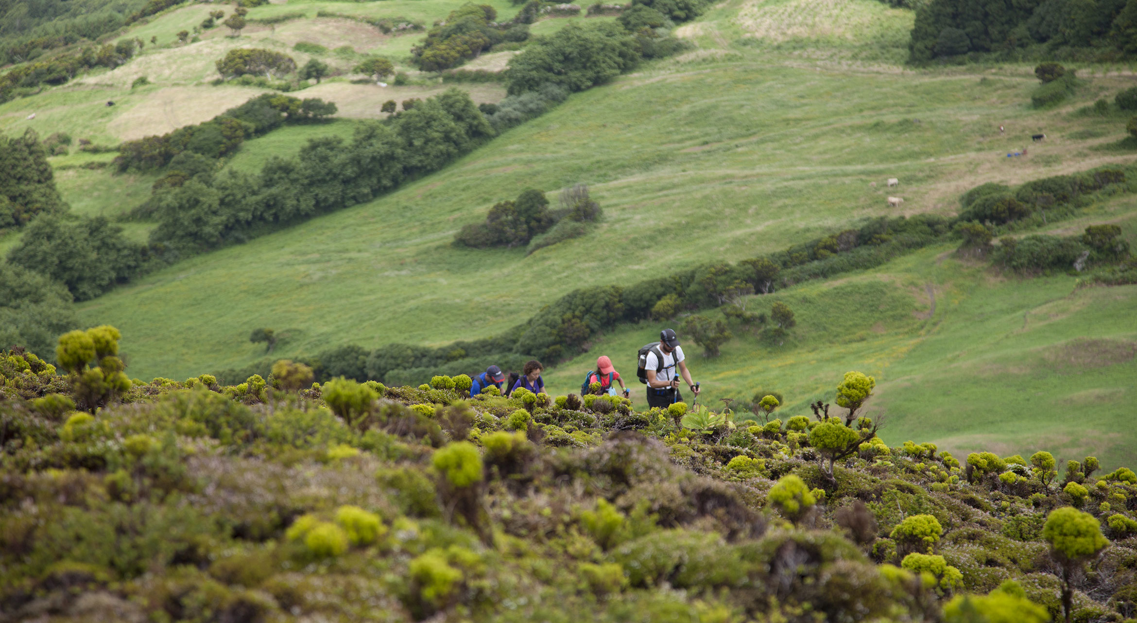 people trailrunning in the nature