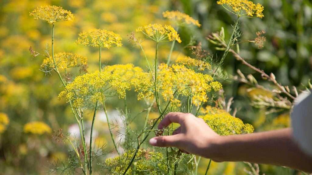 flores nos trilhos